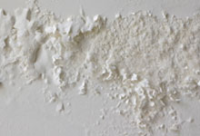 Santa Monica drywall mold removal